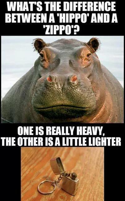 ordvits-lighter-hippo
