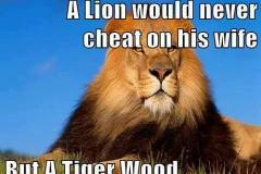 ordvits-tiger-wood