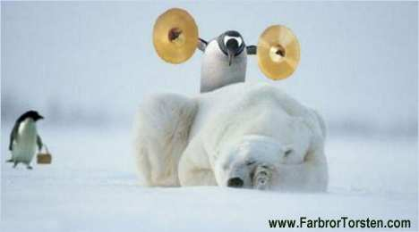 Pingviner från Sydpolen åker till Nordpolen och busar