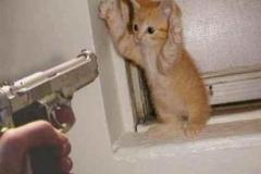Hotad kissekatt