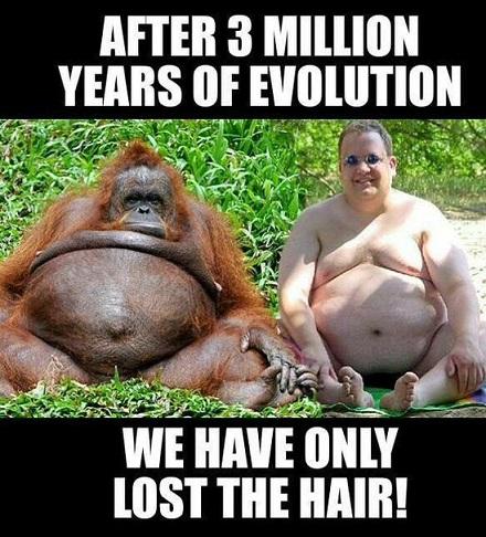 Orangutang och man bevis för evolutionen