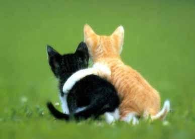 Söta bilder kan vara bättre än galna raggningsfraser. Här två fina katter som kramas.
