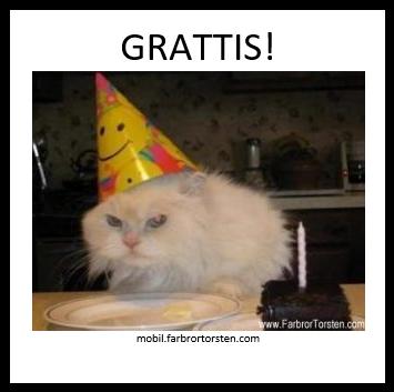 Katt och födelsedagstårta
