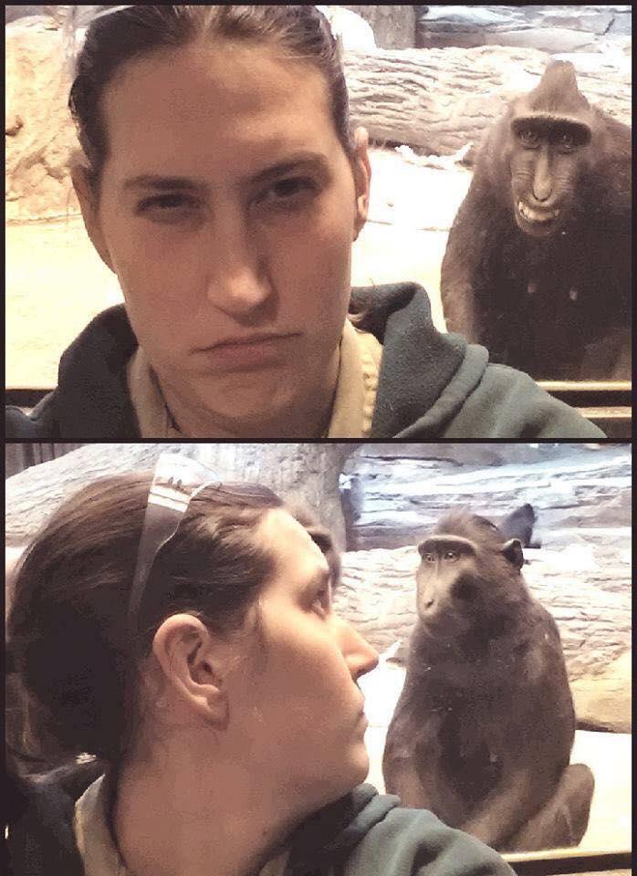 Av alla roliga apor är denna kanske roligaste, för den fotobombar.