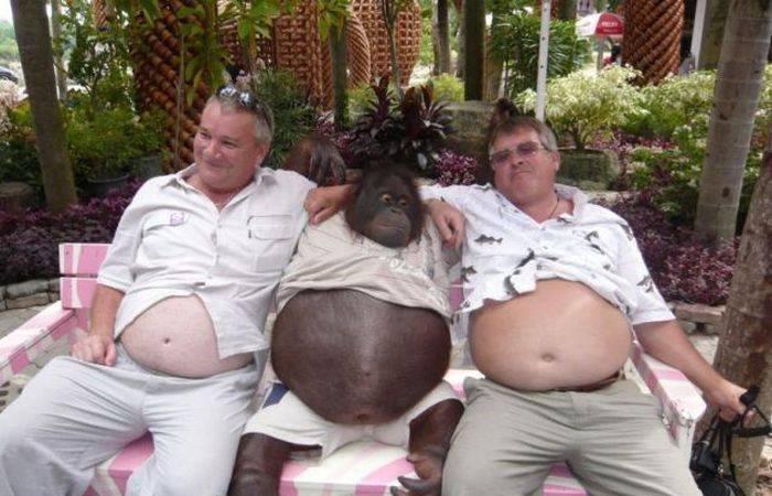 Roliga apor eller semesterbilder på Farbror Torsten? Stora mage har de i alla fall.