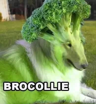Brocolli är en hundans ordvits.